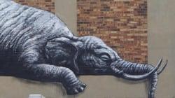 C'è un elefante a