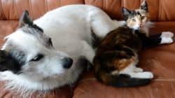 ÉTUDE: Nos animaux de compagnie vivent de plus en plus