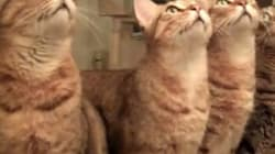 Are These The Best Cat Videos Of The