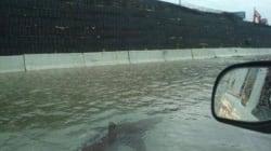 Gli squali nella metro, i