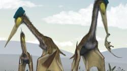 Spectaculaire exposition sur les ptérosaures à New