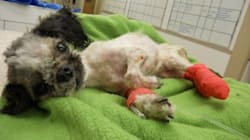 Neglected Dog Dies, Charges