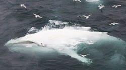 In Norvegia ricompare la balena bianca