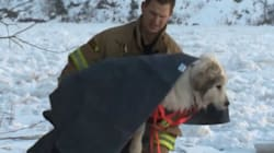 WATCH: Amazing Dog Rescue From Icy