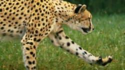 El animal más rápido del mundo, como nunca lo habías visto