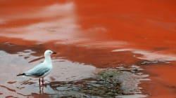 La plage de Bondi en Australie devient