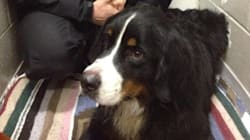 Lost Mountain Dog