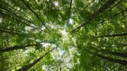 Perdu en forêt: un chasseur est retrouvé après 21
