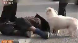 La tenerezza del cagnolino che vigila sul padrone e sale sull'ambulanza