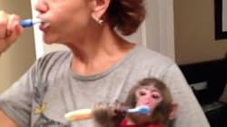 VIDEOS: Ikea Monkey Chilling At