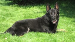 Cargo The RCMP Dog Dies Of
