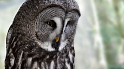 Two Zoo Employees Disciplined Over Owl's