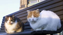 Parliament Hill's Mouse-Killing Cats