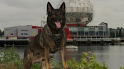 Vancouver Police Dog