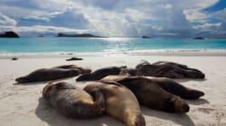 Spiagge da sogno, dalle Hawaii alle