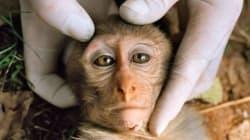 L'Iran a envoyé un singe à bord d'une capsule dans