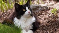 Tuxedo Stan, Cat Who Ran For Mayor Of Halifax, Battling Kidney