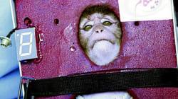 Dalla parte della scimmietta lanciata dall'Iran nello spazio