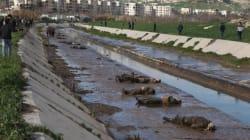 Aleppo: oltre 60 adolescenti giustiziati e gettati nel fiume