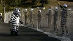 WATCH: Fake Zebra