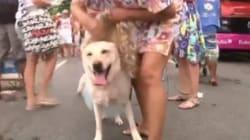 Un carnaval canin à Rio de