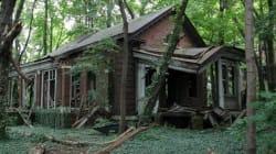 Une île abandonnée... en plein New York