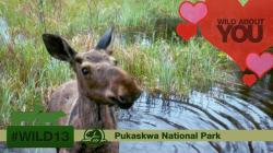 LOOK: Adorable Parks Canada Photos Celebrate Valentine's