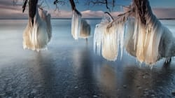 LOOK: Lake Ontario trees Iced Over In Amazing Winter
