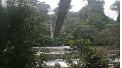 Hollande-Biya: la déforestation, l'huile de palme, on en