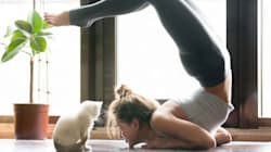 This Cat Yoga Trend Serves A Much Bigger