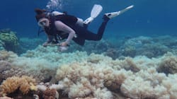 Coral Reefs Are Changing So Fast, Scientists Say We Need To Rewrite The