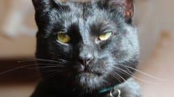 Animal Shelter Writes Badass Adoption Memo For 'Utter Bastard Of A