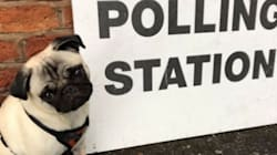 Dogs At Polling Stations Are Getting The UK Through Election