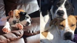 People Are Sharing Photos Of Their Puppies All Grown Up And It's