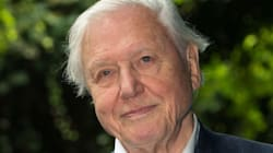 David Attenborough Reveals Sadness Over 'Tragic Sight' Of World's