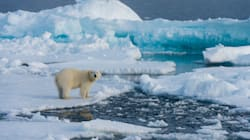 'Unusually' Thin And Fractured Arctic Ice Hints At Yet Another Record