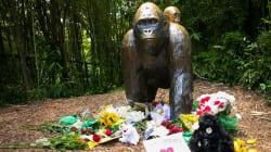 Ohio Zoo Defends Decision To Shoot