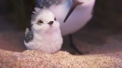 The Star Of Pixar's New Short Film May Be Its Cutest Character