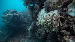 Dying Coral Reefs Likely To Be Walloped For Third Year In A