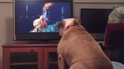 Brave Bulldog Tries To Save Girl In Horror Movie From Certain