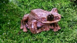 The Loneliest Frog On Earth Dies, Marking The End Of Yet Another