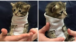 Kitten In Sweater Rescued During Hurricane Matthew Is What We Need Right