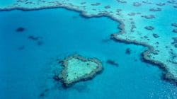 Great Barrier Reef Obituary Goes Viral, To The Horror Of