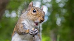 Politician Who Criticized Squirrels Gets Hospitalized By