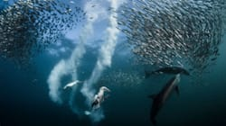 Awesome Is What The 2016 National Geographic 'Nature Photographer Of The Year' Winners