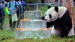 Pan Pan, The World's Oldest Male Giant Panda, Dies At