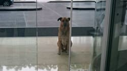 Devoted Stray Pup Who Kept Showing Up At Flight Attendant's Hotel Finally