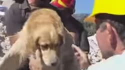 Rescuers Pull Dog From Rubble 10 Days After Italy's