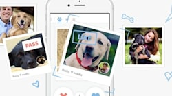 Tindog, el Tinder de los perros: ¡ellos también tienen que