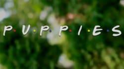 L'ouverture de «Friends» est encore plus adorable avec des chiots